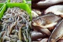 البرزنشینان سالانه 9 کیلو غذای دریایی میخورند