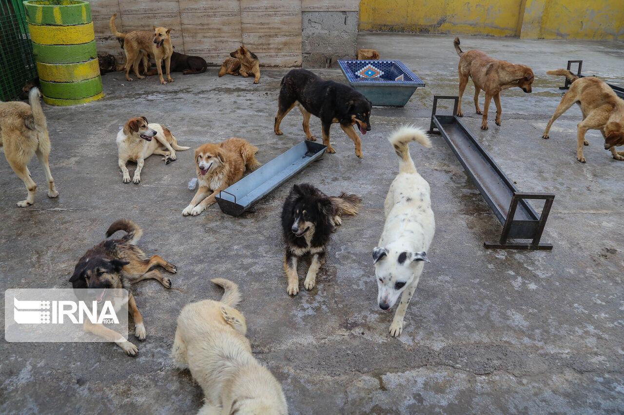پناهگاه حیوانات بدون صاحب یزد در دست ساخت است