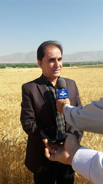 تولید 4000 تن دانه روغنی کلزا در استان