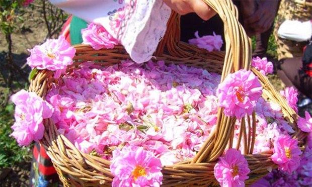 بوی جاودانه گل با گلاب میمند فارس