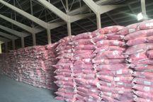 موجودی گندم در آذربایجان شرقی کفاف مصرف ۵ ماهه استان را میدهد