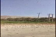 ورود دوباره گله های بزرگ ملخ به جنوب ایران