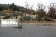 هرس زمستانه درختان معابر و پارکهای شهری سنندج آغاز شد