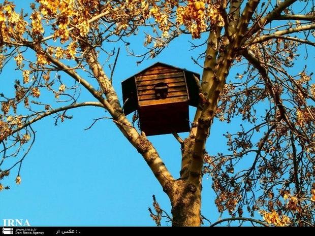 لانه هایی برای پرندگان در بوستانهای مشهد نصب شد