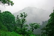 تمدید ممنوعیت شکار در جنگلهای مازندران