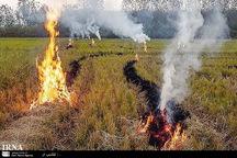 8 هکتار از مراتع فیروزکوه در آتش سوخت