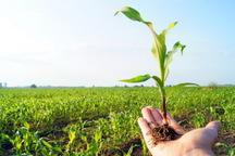 دولت با تقویت کشاورزی در تلاش برای خنثی سازی تحریم هاست