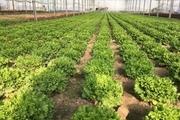 700 هکتار کشت گلخانهای در خراسان جنوبی ایجاد میشود