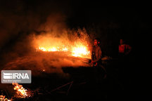۲۰ گوسفند در آتشسوزی یک انبار چوب پایتخت تلف شدند
