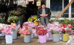 وایتکس و یخ عمر گل ها را بیشتر می کند؟