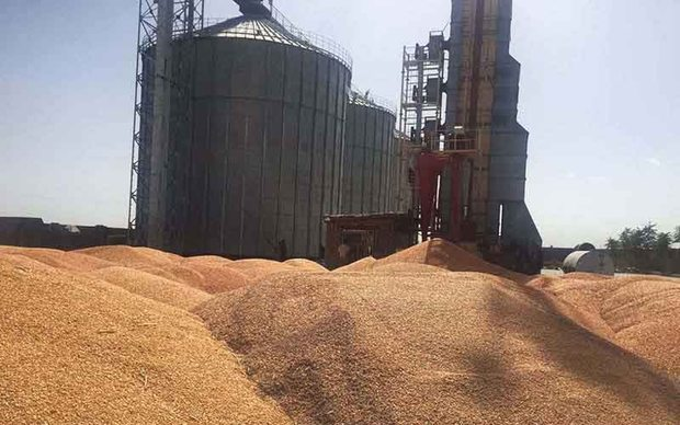 ظرفیت ذخیره سیلوهای گندم ایلام به 400 هزار تن رسید