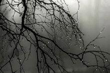 بارش ۱۵.۸ میلیمتری باران در یاسوج  جمعه هوای استان صاف خواهد بود