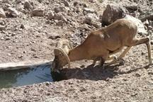 ماهانه 100 هزار لیتر آب در آبشخورهای حیات وحش ایلام تخلیه می شود