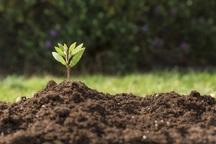 معاون وزیر جهاد کشاورزی: جایگاه خاک در کشور را ارتقاء دهیم