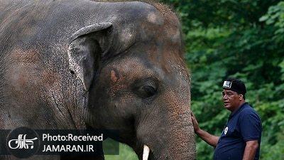 عکس/ تنهاترین فیل دنیا عاقبت به خیر شد!
