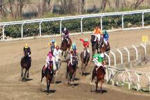 هفته نوزدهم مسابقات اسبدوانی گنبدکاووس برگزار شد