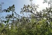 سرمازدگی به ۱۲۵۰ هکتار از باغات لردگان خسارت وارد کرد