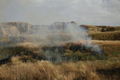 آتش سوزی در هشت هکتار از مزارع گندم بوکان