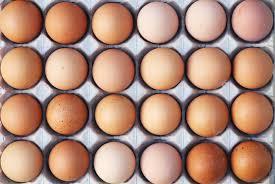 خبری از صادرات تخممرغ نیست