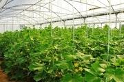 احداث شهرک گلخانهای در کوهدشت با صرف اعتبار ۱۵ میلیاردی
