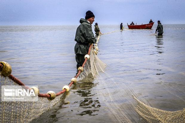 ماهیان زرد پر تاثیری در کاهش کیفیت آب سد شیرین دره خراسان شمالی ندارند
