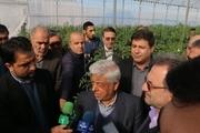سرپرست وزارت جهادکشاورزی: اعتراض کشاورزان در خصوص قیمت پایین گندم به حق است