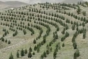 باغداران بوشهری نهال خود را از نهالستانهای معتبر تهیه کنند