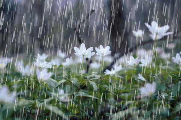 ۱۳ فروردین چهارمحال و بختیاری بارانی است