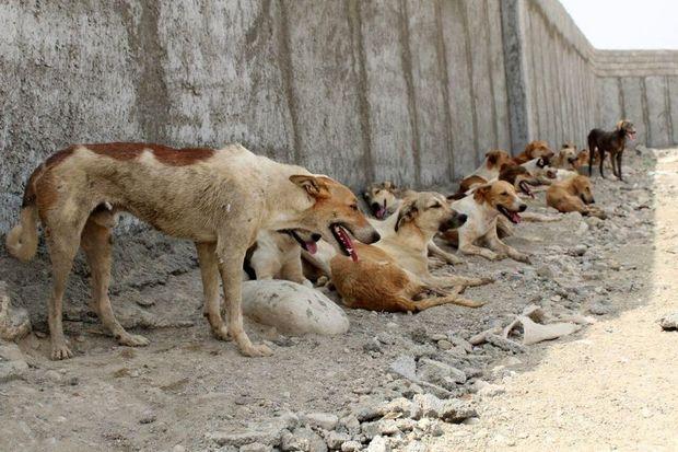 شهرداری: سگ های ولگرد به 6 شهروند تهرانی حمله کردند