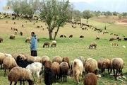 لزوم تعیین تکلیف زمینهای واگذار شده مجتمع گاو شیری بافق