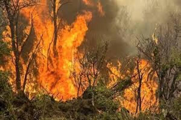 10 هکتار از مراتع تالاب هامون در آتش سوخت