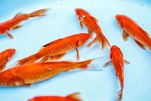 شهروندان ماهی قرمز نوروز را از مراکز بهداشتی تهیه کنند