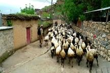 دستگاه های اجرایی البرز موظف به اشتغالزایی در روستاها شدند