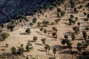 مبارزه بیولوژیکی با آفت جوانه خوار بلوط در ۳۵۰ هکتار از جنگل های کهگیلویه و بویراحمد اجرا شد