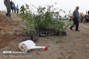 بذر سه هزار درخت بادام تلخ در مناطق مختلف شهر سنندج کاشته شد