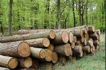 ۱۵.۶ تُن چوب قاچاق در بوکان کشف شد