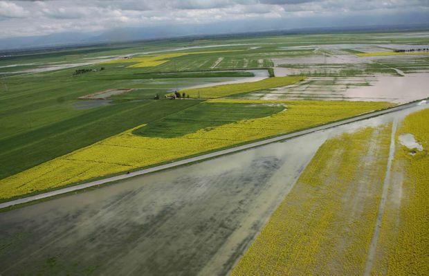 بهرهبرداران تا پایان آذر برای بیمه محصولات کشاورزی مهلت دارند