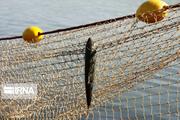 پنج هکتار حوضچه پرورش ماهی غیرمجاز در شادگان تخریب شد