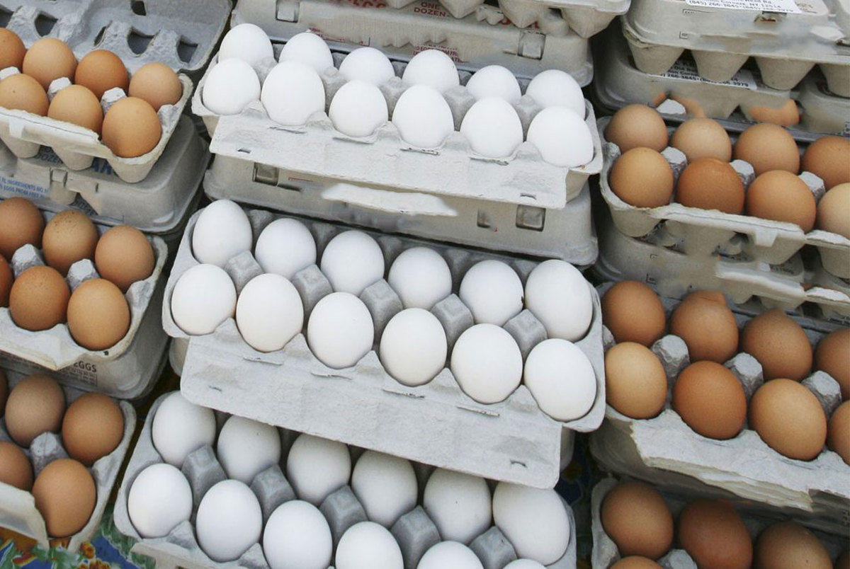 یک نکته عجیب در مورد گرانی تخم مرغ/ علت اصلی گرانی تخم مرغ چیست؟