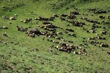 خطر فرسایش خاک در 70 درصد از مراتع گیلان  اختصاص اعتبار 20 میلیارد تومانی به حوزه آبخیزداری در استان