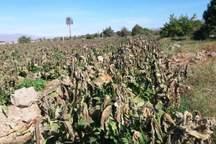 13.8 میلیارد ریال غرامت سیل برای خسارتدیدگان بخش کشاورزی