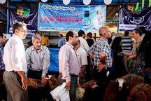 ۳۰ هزار دام زنده عشایر تهران در عید قربان عرضه می شود