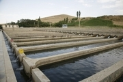 ظرفیت تولید ماهی در چهارمحال و بختیاری ۳۰ هزار تن است