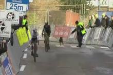 مختل شدن مسابقه دوچرخه سواری توسط سگی در بلژیک
