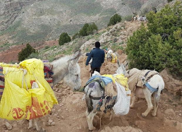 140 تن ماده معدنی قاچاق در خراسان شمالی کشف شد