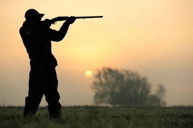 صدور پروانه شکار پرندگان در استان قزوین آغاز شد