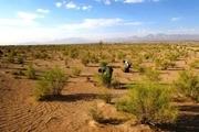 آفت گیاهی در مراتع خراسان جنوبی افزایش یافت