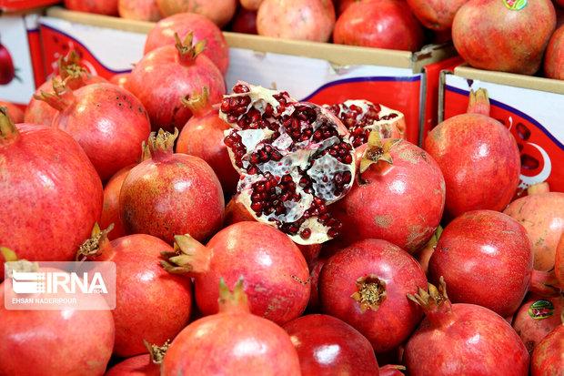 نمایشگاه میوههای بهشتی در پایتخت گشایش یافت
