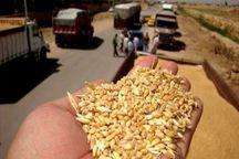 هفت دستگاه تریلر حامل گندم قاچاق در زنجان توقیف شدند