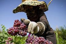 300 میلیارد ریال تسهیلات اشتغال روستایی در کردستان پرداخت شد